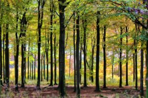 Steht im Wald